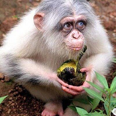 Crazy Monkey Deluxe Крейзи Манки 2 – играть бесплатно в.